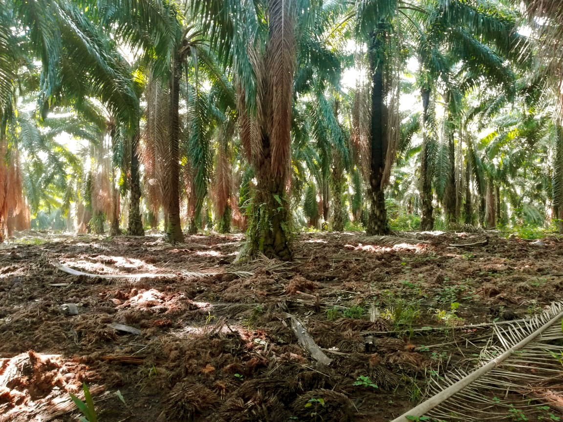 El raquis, elemento clave para la conservación de suelos.